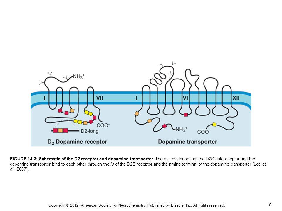 7 FIGURE 14-4: Pathways of norepinephrine degradation.