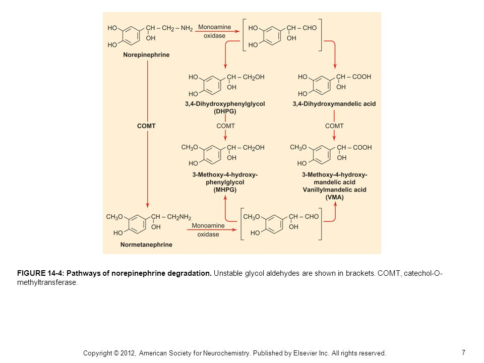 7 FIGURE 14-4: Pathways of norepinephrine degradation. Unstable glycol aldehydes are shown in brackets. COMT, catechol-O- methyltransferase. Copyright
