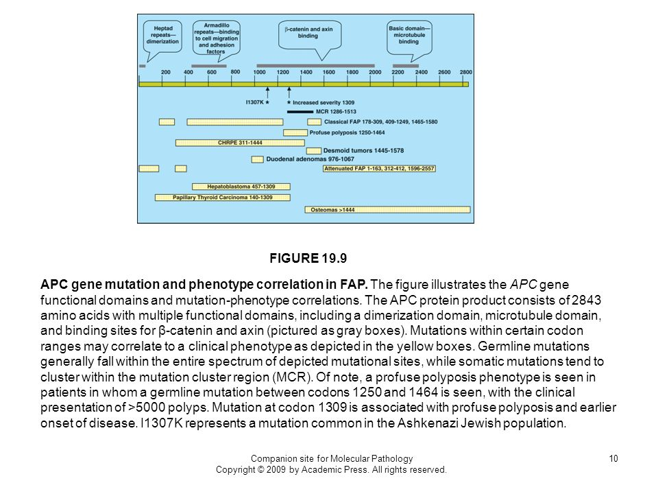 Companion site for Molecular Pathology Copyright © 2009 by Academic Press. All rights reserved. 10 FIGURE 19.9 APC gene mutation and phenotype correla