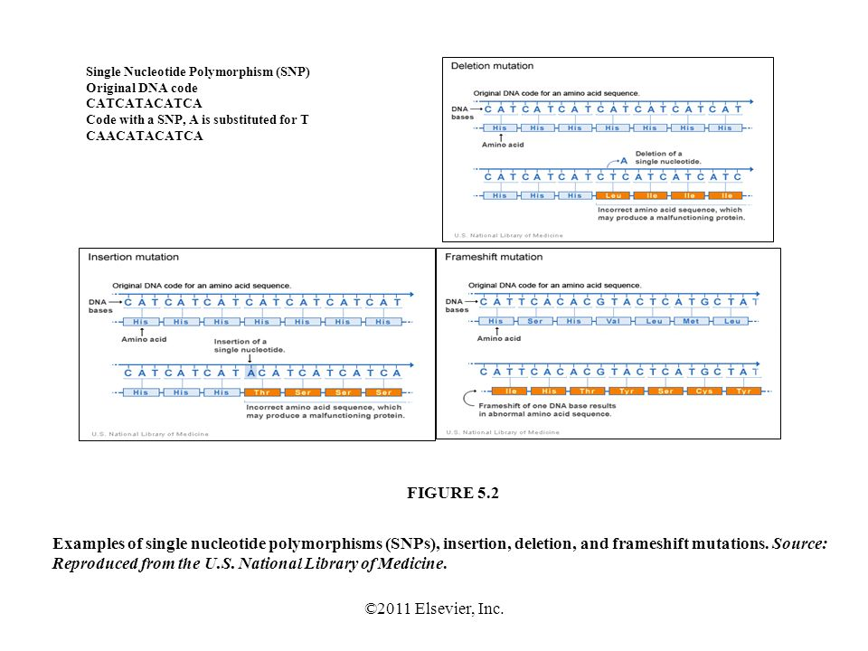 ©2011 Elsevier, Inc. Examples of single nucleotide polymorphisms (SNPs), insertion, deletion, and frameshift mutations. Source: Reproduced from the U.