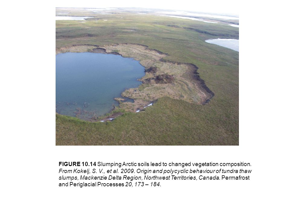 FIGURE Slumping Arctic soils lead to changed vegetation composition.