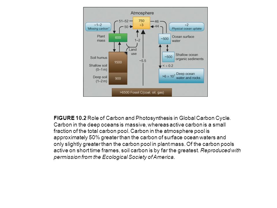 FIGURE 10.2 Role of Carbon and Photosynthesis in Global Carbon Cycle.