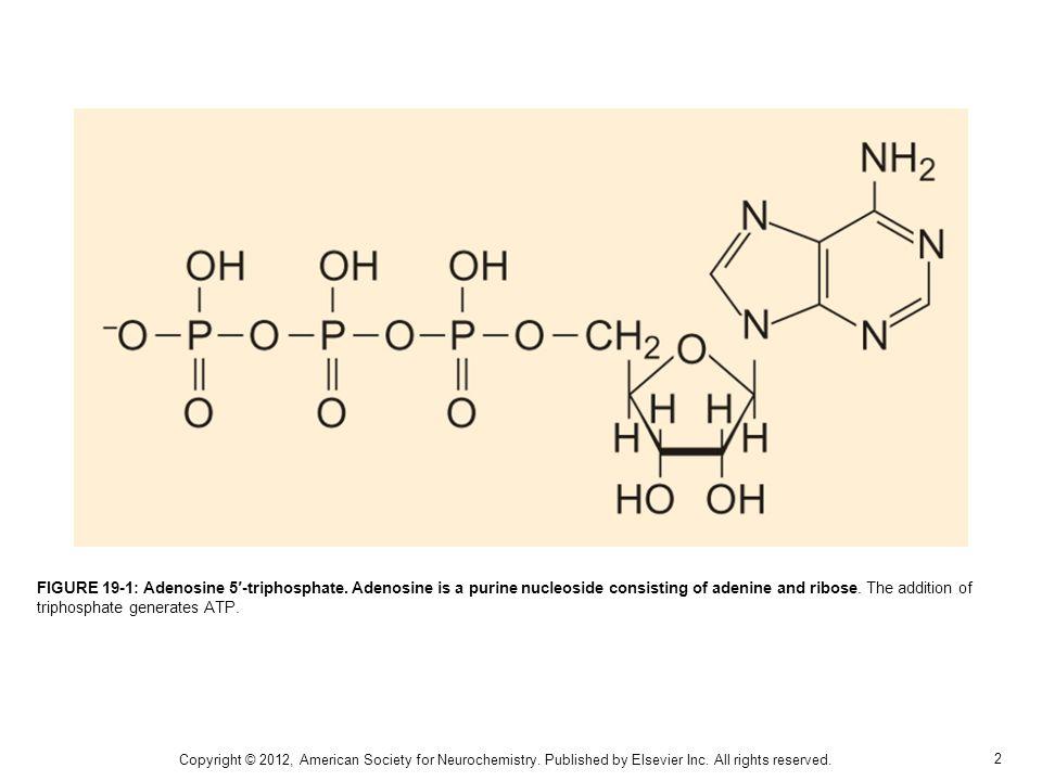 2 FIGURE 19-1: Adenosine 5-triphosphate.