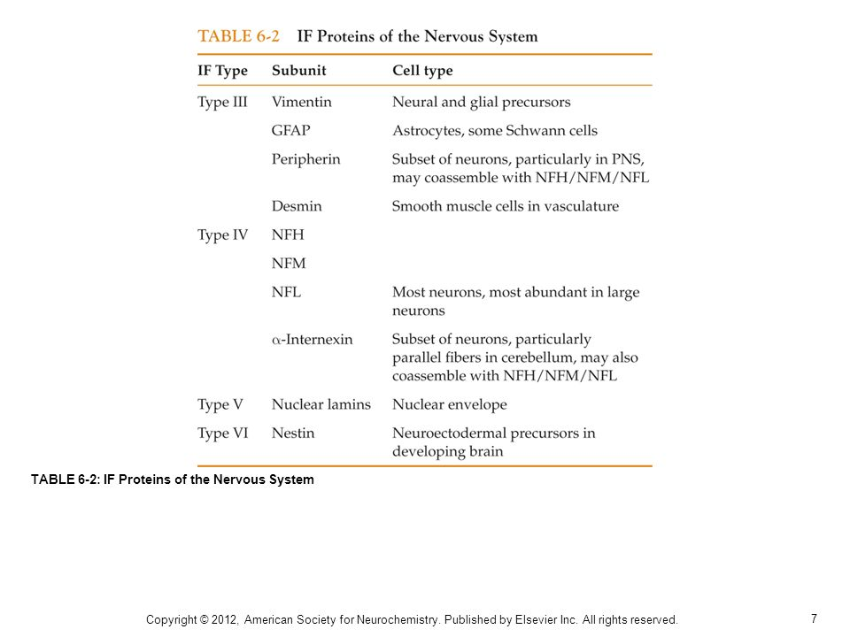 7 TABLE 6-2: IF Proteins of the Nervous System Copyright © 2012, American Society for Neurochemistry. Published by Elsevier Inc. All rights reserved.