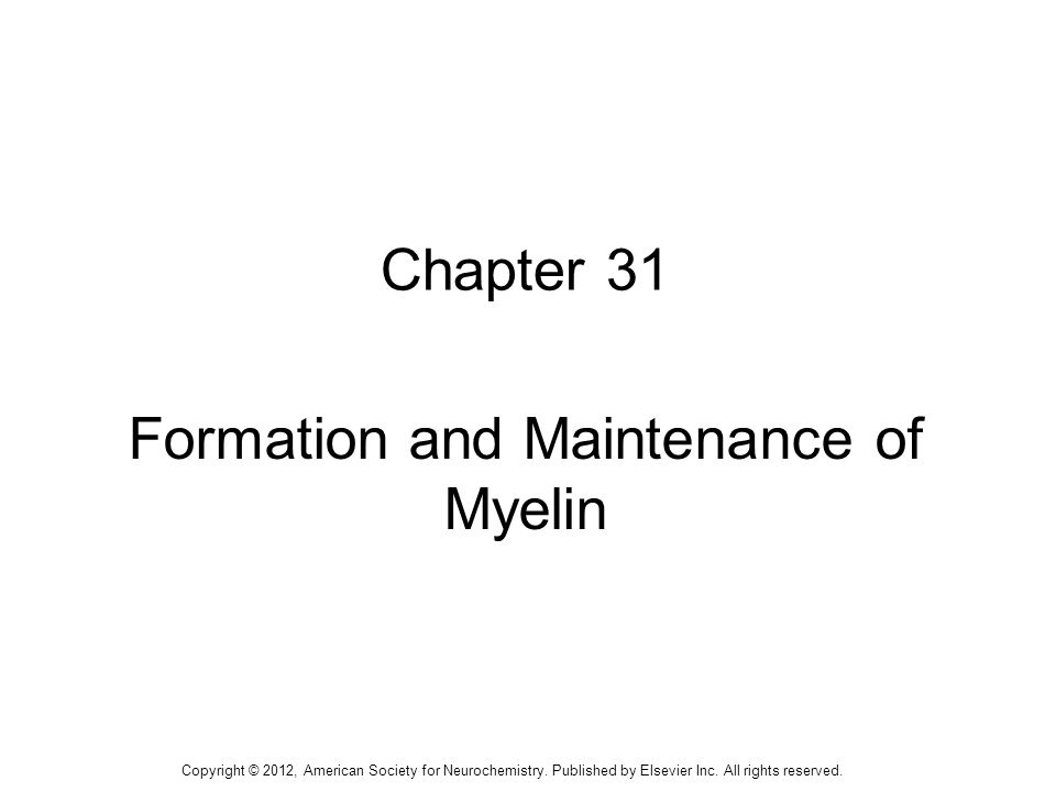 1 Chapter 31 Formation and Maintenance of Myelin Copyright © 2012, American Society for Neurochemistry. Published by Elsevier Inc. All rights reserved