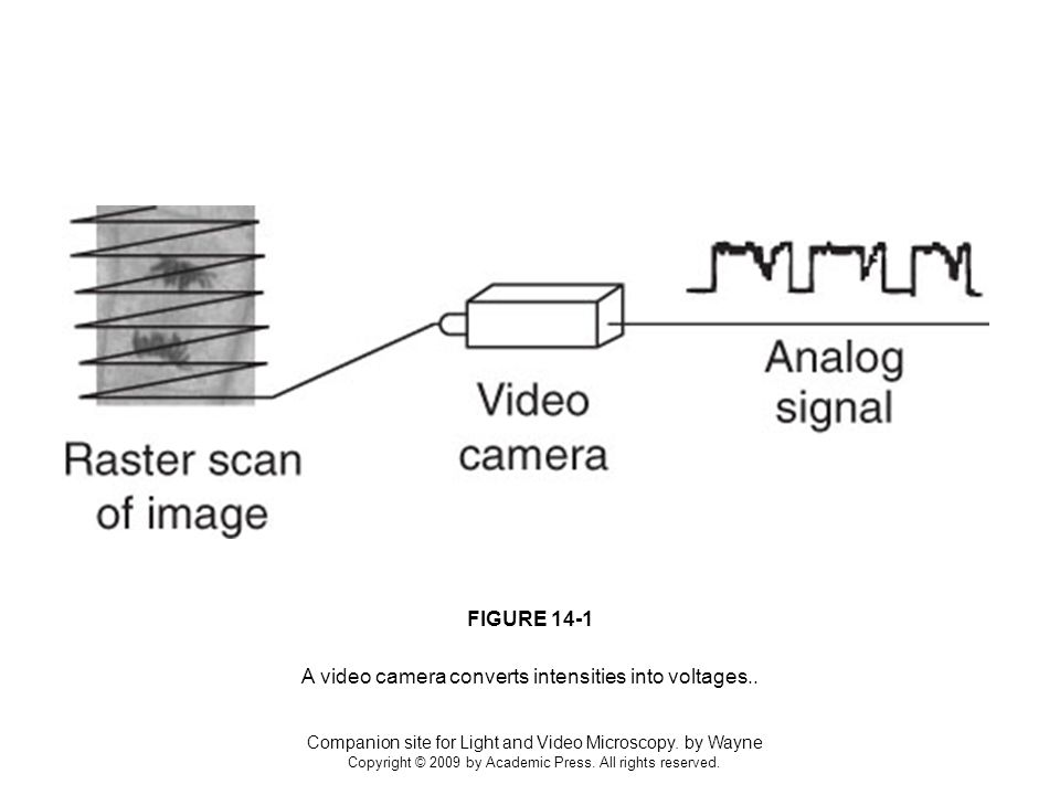 Companion site for Light and Video Microscopy.by Wayne Copyright © 2009 by Academic Press.