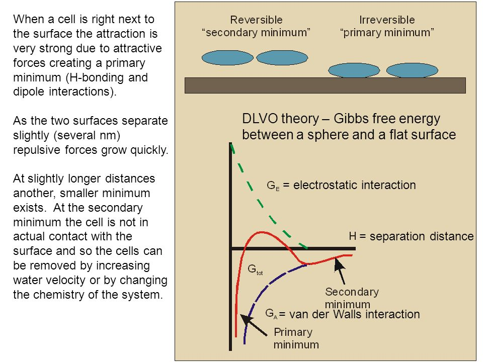 = electrostatic interaction = separation distance = van der Walls interaction When a cell is right next to the surface the attraction is very strong due to attractive forces creating a primary minimum (H-bonding and dipole interactions).