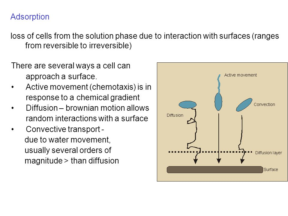 Adsorption loss of cells from the solution phase due to interaction with surfaces (ranges from reversible to irreversible) There are several ways a cell can approach a surface.