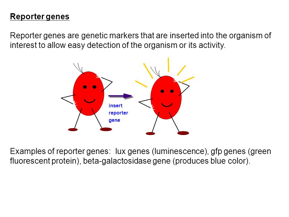 Reporter genes are genetic markers that are inserted into the organism of interest to allow easy detection of the organism or its activity. Examples o