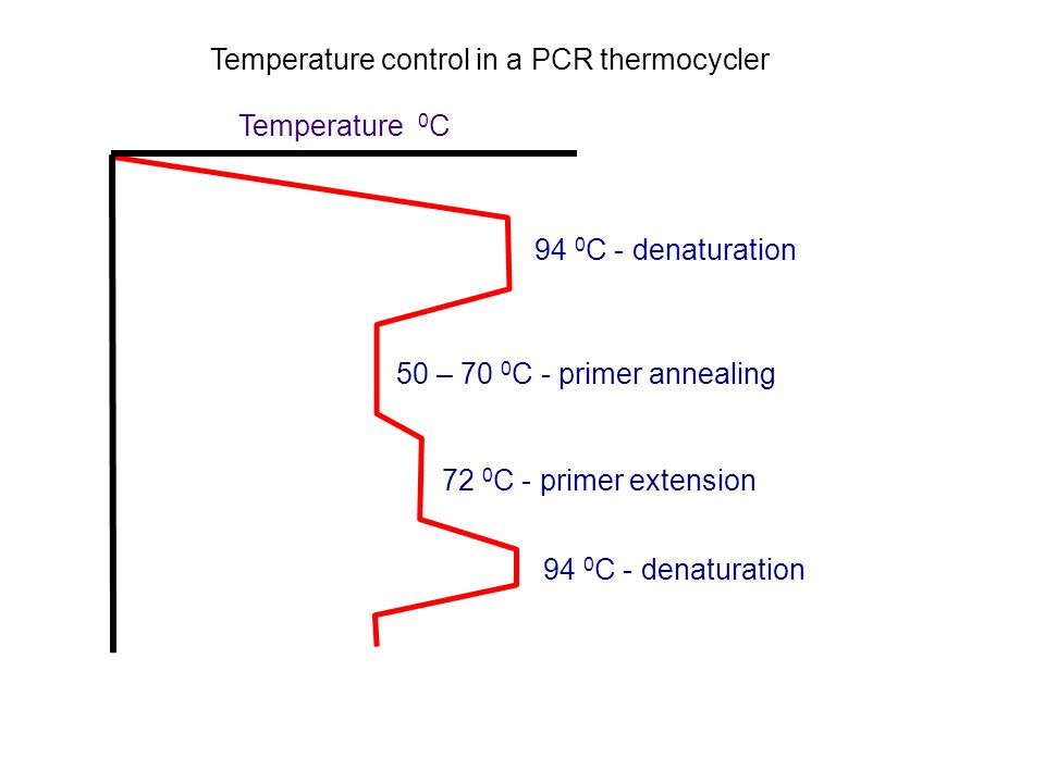 72 0 C - primer extension 94 0 C - denaturation Temperature 0 C Temperature control in a PCR thermocycler 94 0 C - denaturation 50 – 70 0 C - primer a
