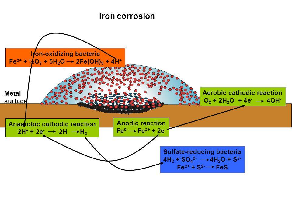 Metal surface Anaerobic cathodic reaction 2H + + 2e - 2H H 2 Aerobic cathodic reaction O 2 + 2H 2 O + 4e - 4OH - Anodic reaction Fe 0 Fe 2+ + 2e - Sul