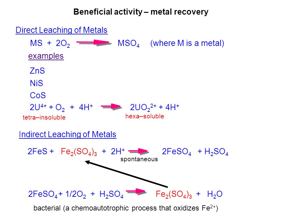 Direct Leaching of Metals MS + 2O 2 MSO 4 (where M is a metal) examples ZnS NiS CoS 2U 4+ + O 2 + 4H + 2UO 2 2+ + 4H + hexa–soluble tetra–insoluble Indirect Leaching of Metals 2FeS + Fe 2 (SO 4 ) 3 + 2H + 2FeSO 4 + H 2 SO 4 2FeSO 4 + 1/2O 2 + H 2 SO 4 Fe 2 (SO 4 ) 3 + H 2 O spontaneous bacterial (a chemoautotrophic process that oxidizes Fe 2+ ) Beneficial activity – metal recovery