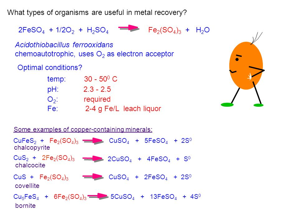 Acidothiobacillus ferrooxidans chemoautotrophic, uses O 2 as electron acceptor What types of organisms are useful in metal recovery? Optimal condition