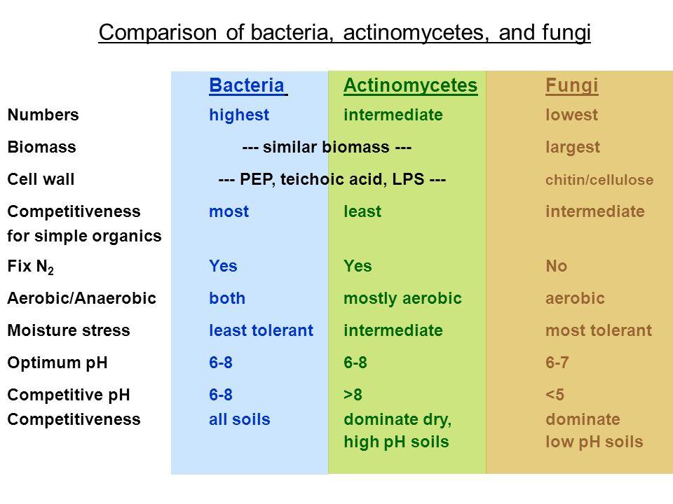 Comparison of bacteria, actinomycetes, and fungi Bacteria ActinomycetesFungi Numbershighestintermediatelowest Biomass --- similar biomass ---largest C