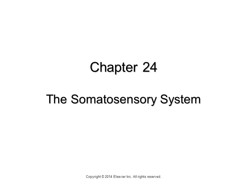 Chapter 24 The Somatosensory System Copyright © 2014 Elsevier Inc. All rights reserved.