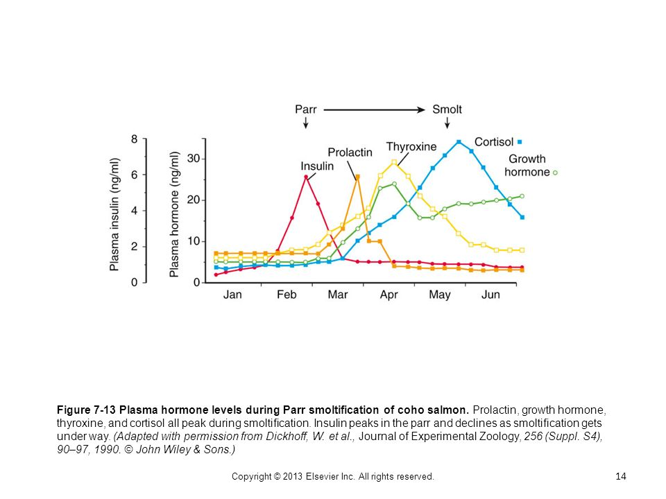 Figure 7-13 Plasma hormone levels during Parr smoltification of coho salmon. Prolactin, growth hormone, thyroxine, and cortisol all peak during smolti