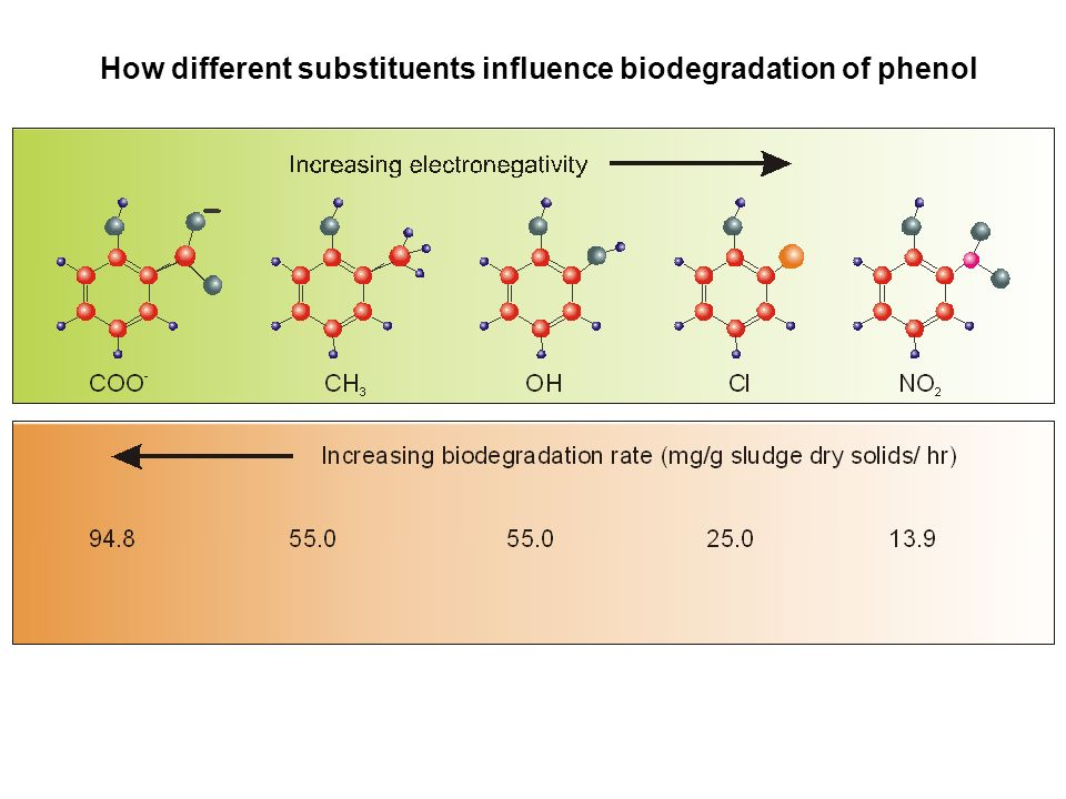 How different substituents influence biodegradation of phenol