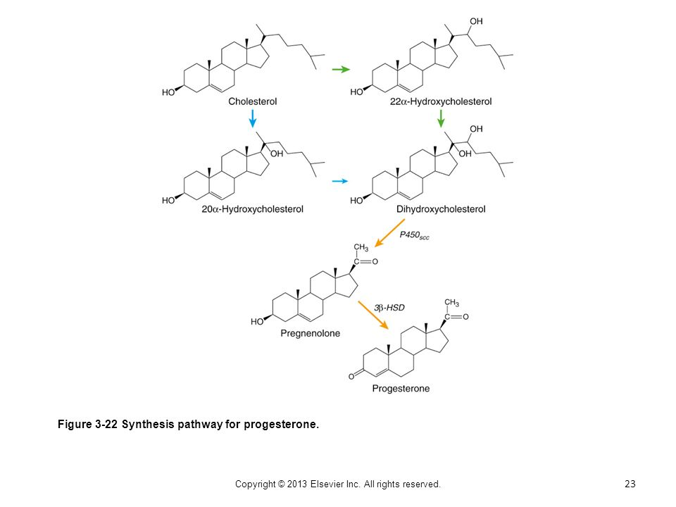 Figure 3-22 Synthesis pathway for progesterone. 23 Copyright © 2013 Elsevier Inc. All rights reserved.