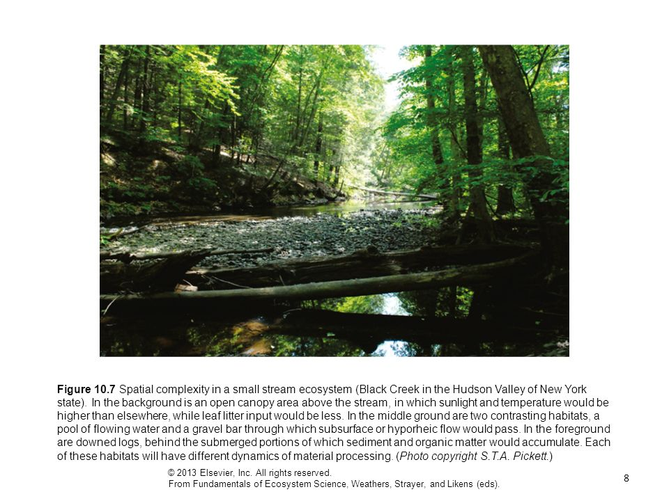 8 Figure 10.7 Spatial complexity in a small stream ecosystem (Black Creek in the Hudson Valley of New York state).