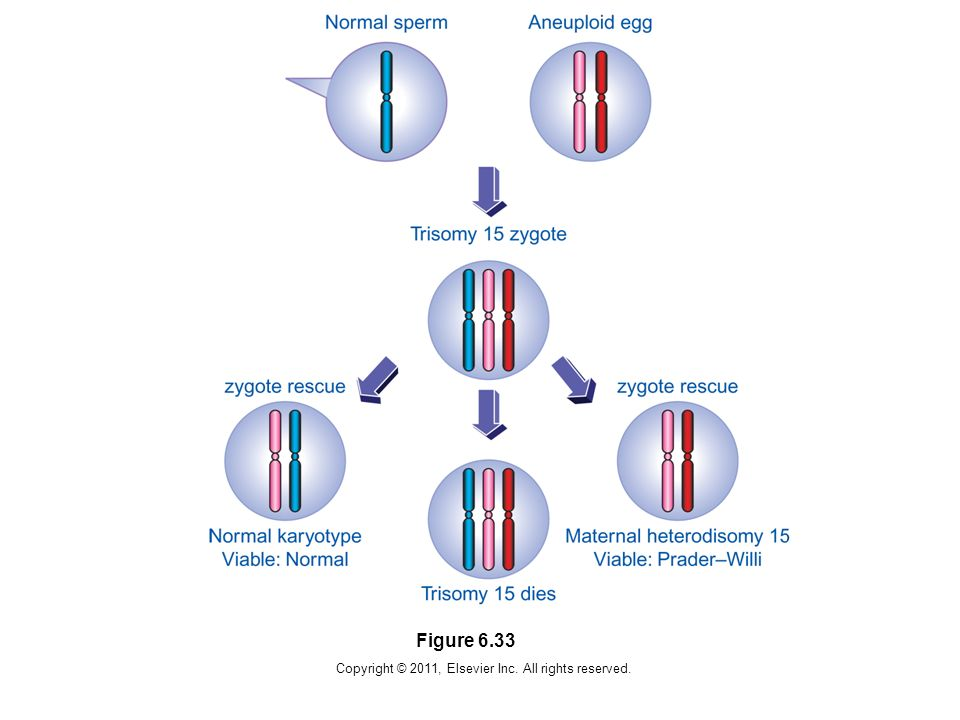 Copyright © 2011, Elsevier Inc. All rights reserved. Figure 6.33