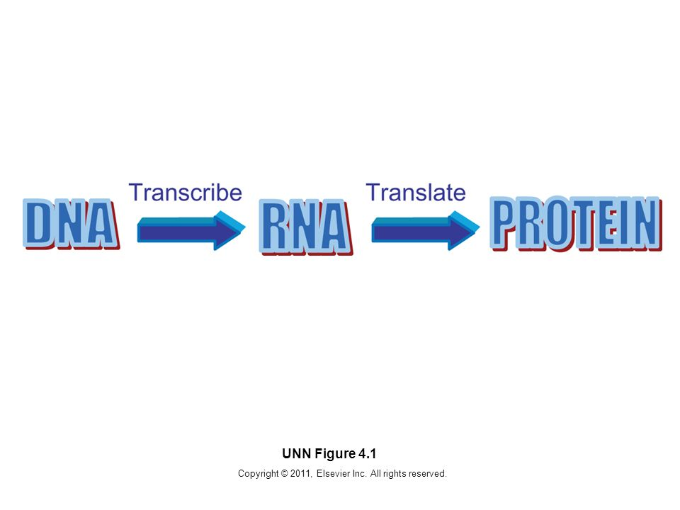 Copyright © 2011, Elsevier Inc. All rights reserved. UNN Figure 4.1
