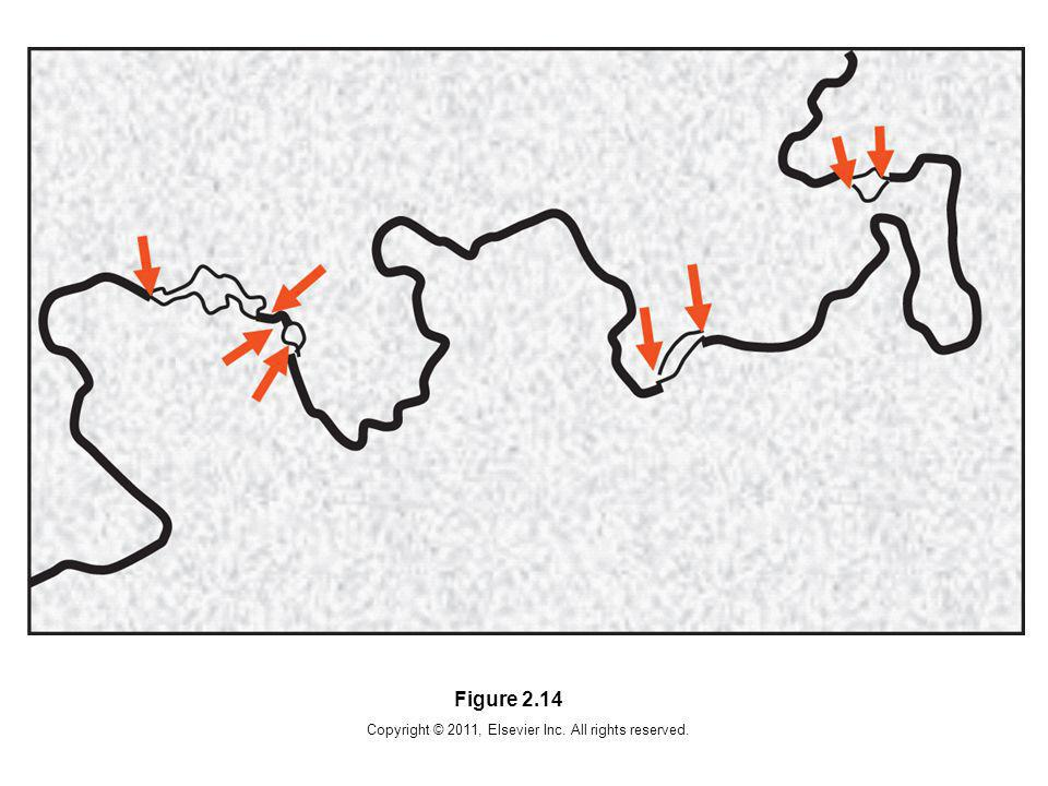 Copyright © 2011, Elsevier Inc. All rights reserved. Figure 2.14