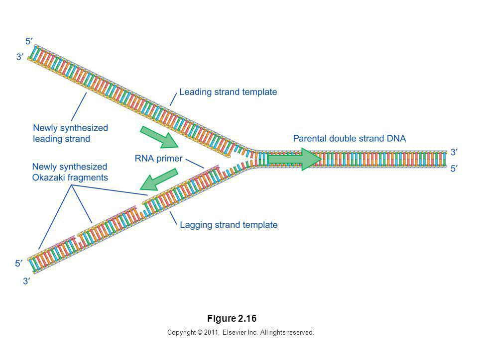 Copyright © 2011, Elsevier Inc. All rights reserved. Figure 2.16