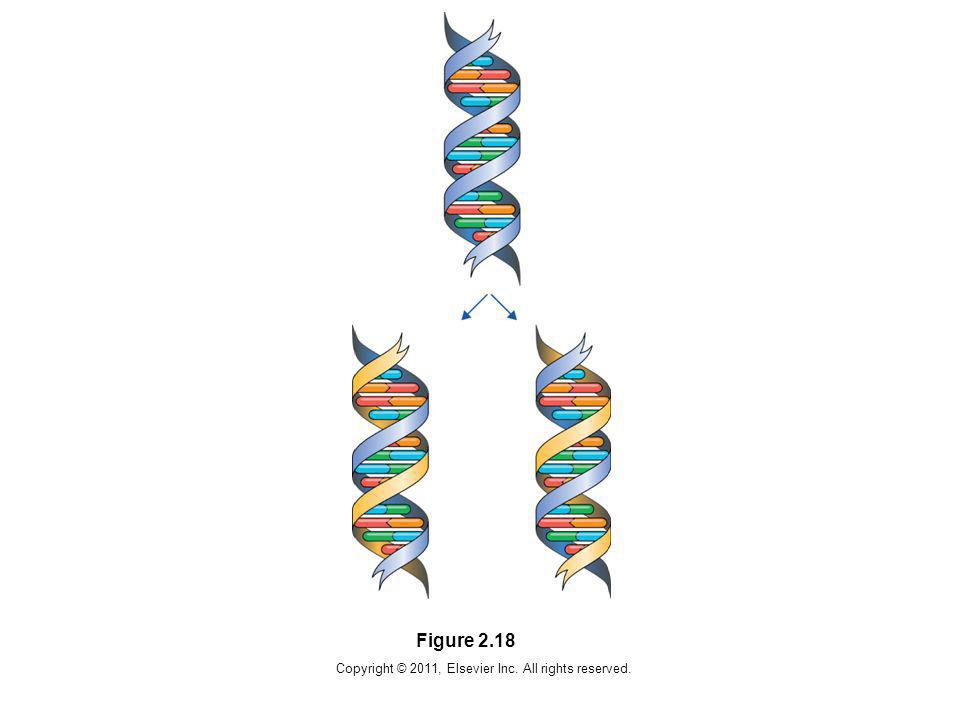 Copyright © 2011, Elsevier Inc. All rights reserved. Figure 2.18