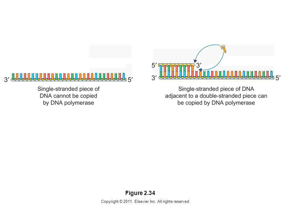 Copyright © 2011, Elsevier Inc. All rights reserved. Figure 2.34