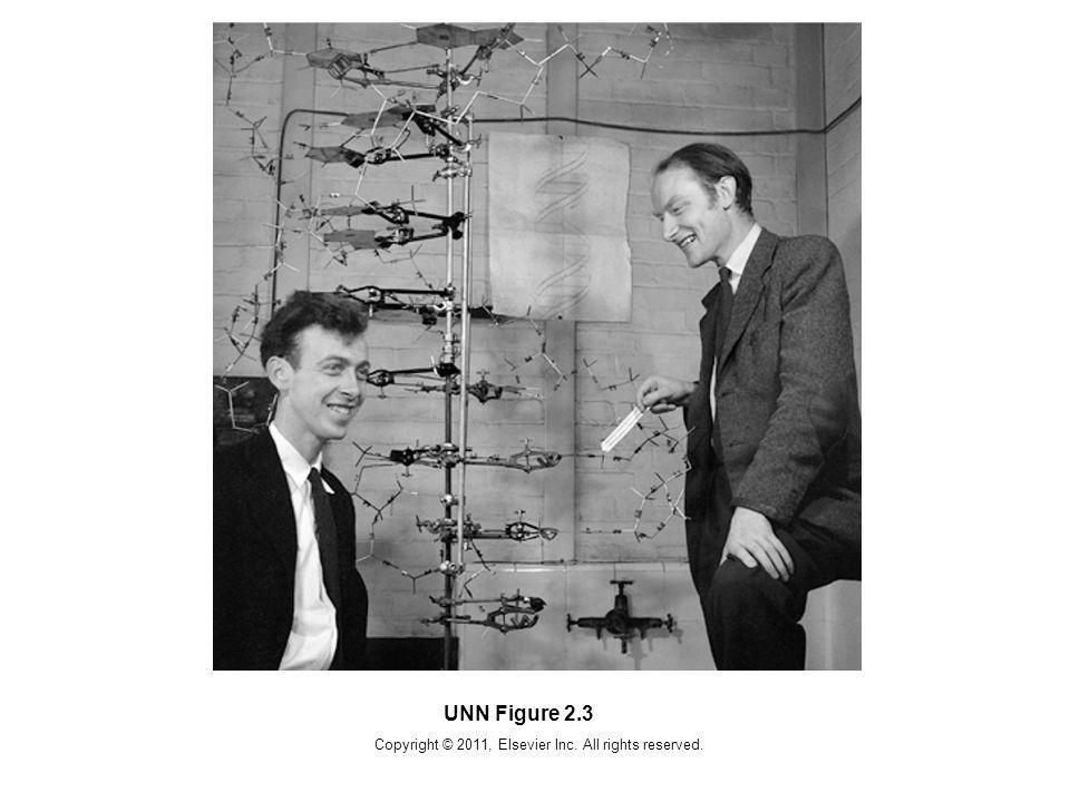 Copyright © 2011, Elsevier Inc. All rights reserved. UNN Figure 2.3