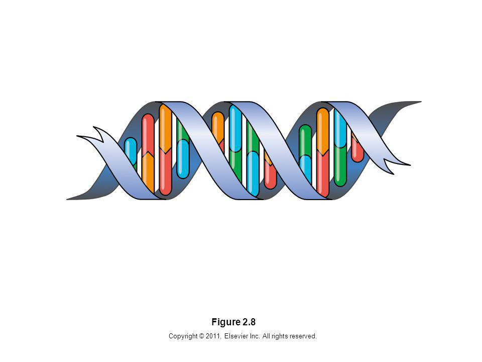 Copyright © 2011, Elsevier Inc. All rights reserved. Figure 2.29