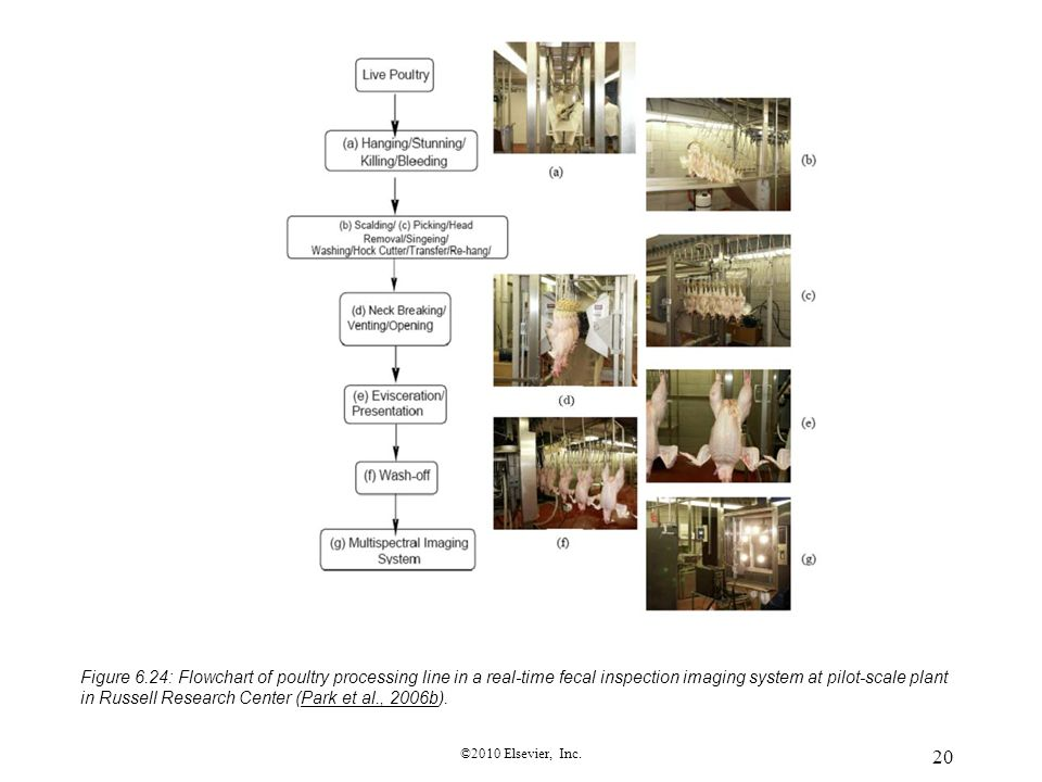 20 ©2010 Elsevier, Inc. Figure 6.24: Flowchart of poultry processing line in a real-time fecal inspection imaging system at pilot-scale plant in Russe