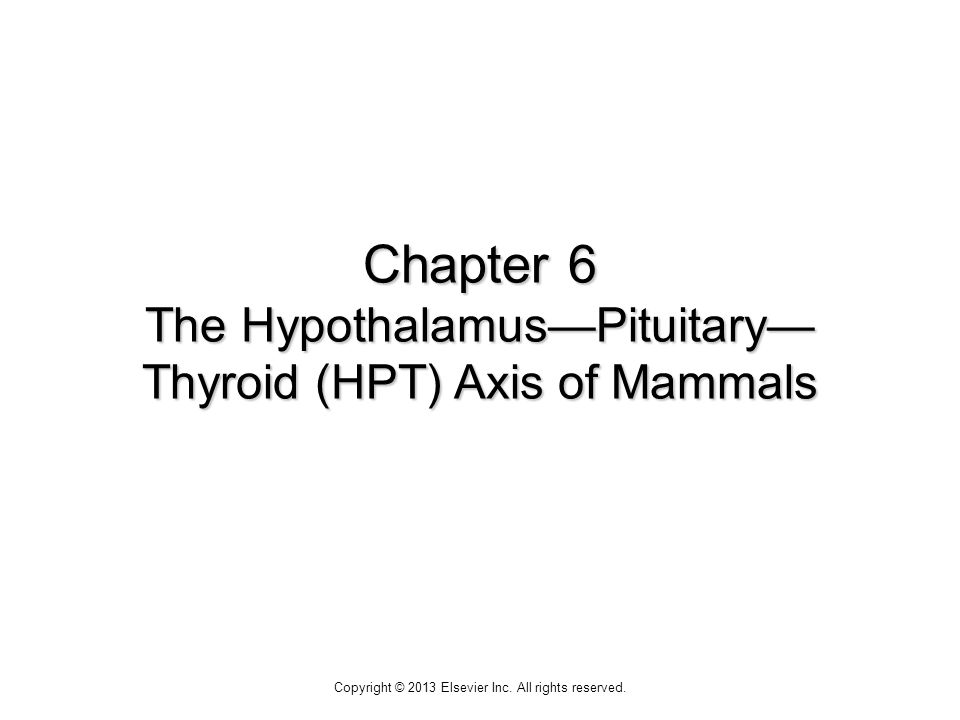 Figure 6-1 The mammalian thyroid.The thyroid gland is located in the neck region.