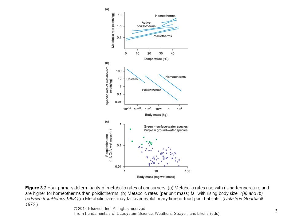 3 Figure 3.2 Four primary determinants of metabolic rates of consumers. (a) Metabolic rates rise with rising temperature and are higher for homeotherm