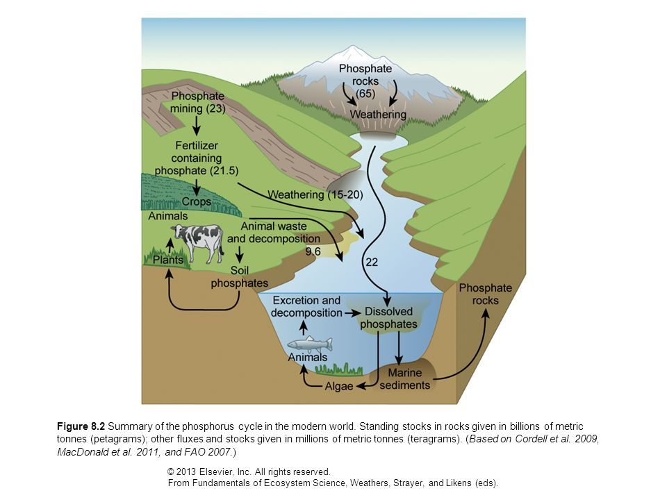 Figure 8.2 Summary of the phosphorus cycle in the modern world. Standing stocks in rocks given in billions of metric tonnes (petagrams); other fluxes