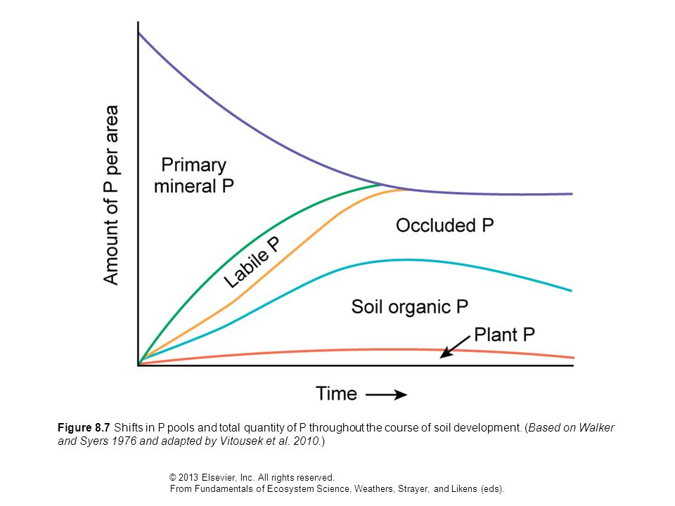 Figure 8.7 Shifts in P pools and total quantity of P throughout the course of soil development. (Based on Walker and Syers 1976 and adapted by Vitouse