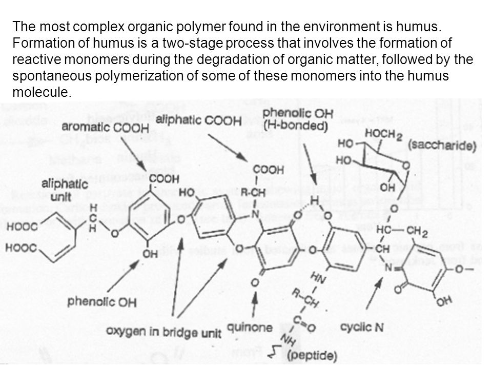 The most complex organic polymer found in the environment is humus. Formation of humus is a two-stage process that involves the formation of reactive