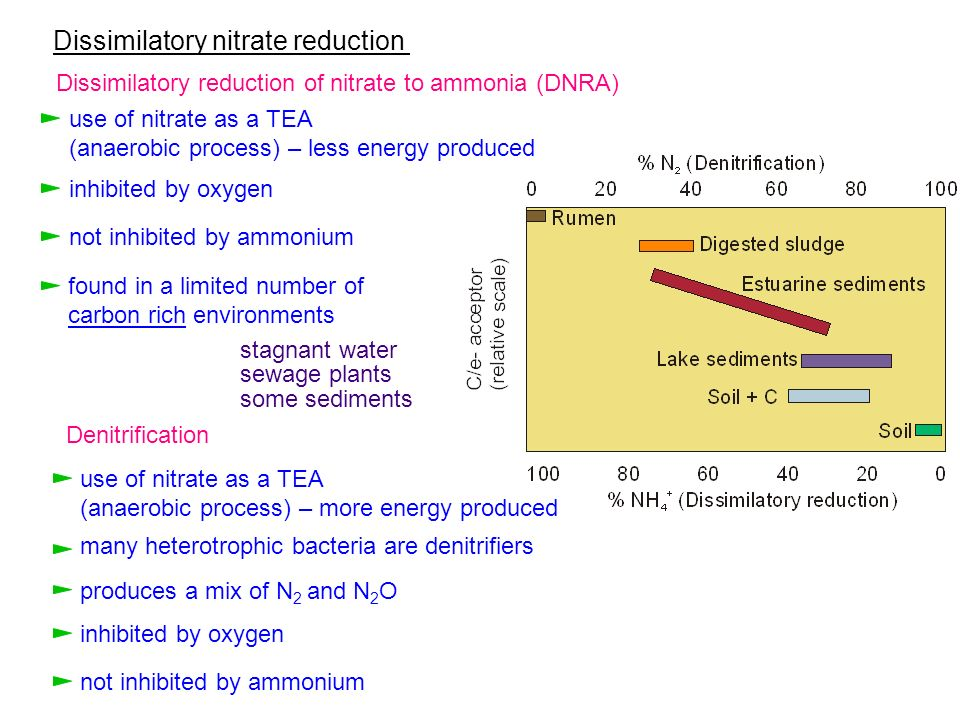 Dissimilatory nitrate reduction Dissimilatory reduction of nitrate to ammonia (DNRA) use of nitrate as a TEA (anaerobic process) – less energy produce