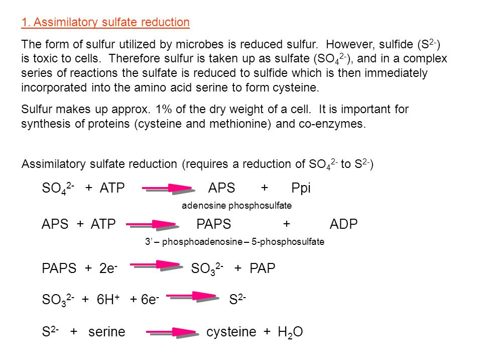 1. Assimilatory sulfate reduction The form of sulfur utilized by microbes is reduced sulfur. However, sulfide (S 2- ) is toxic to cells. Therefore sul