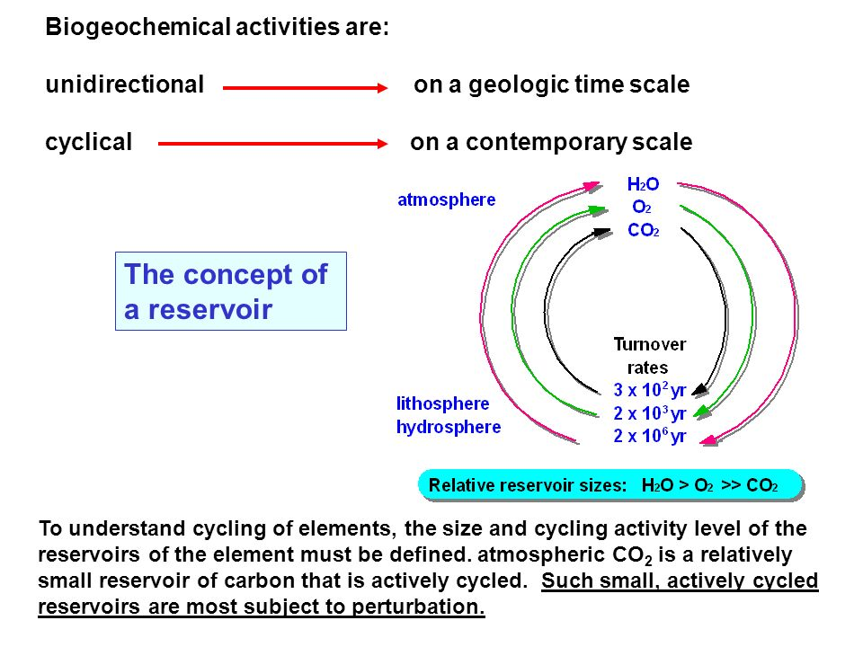 Biogeochemical activities are: unidirectional on a geologic time scale cyclical on a contemporary scale To understand cycling of elements, the size an
