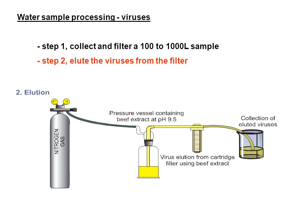 Water sample processing - viruses - step 1, collect and filter a 100 to 1000L sample - step 2, elute the viruses from the filter