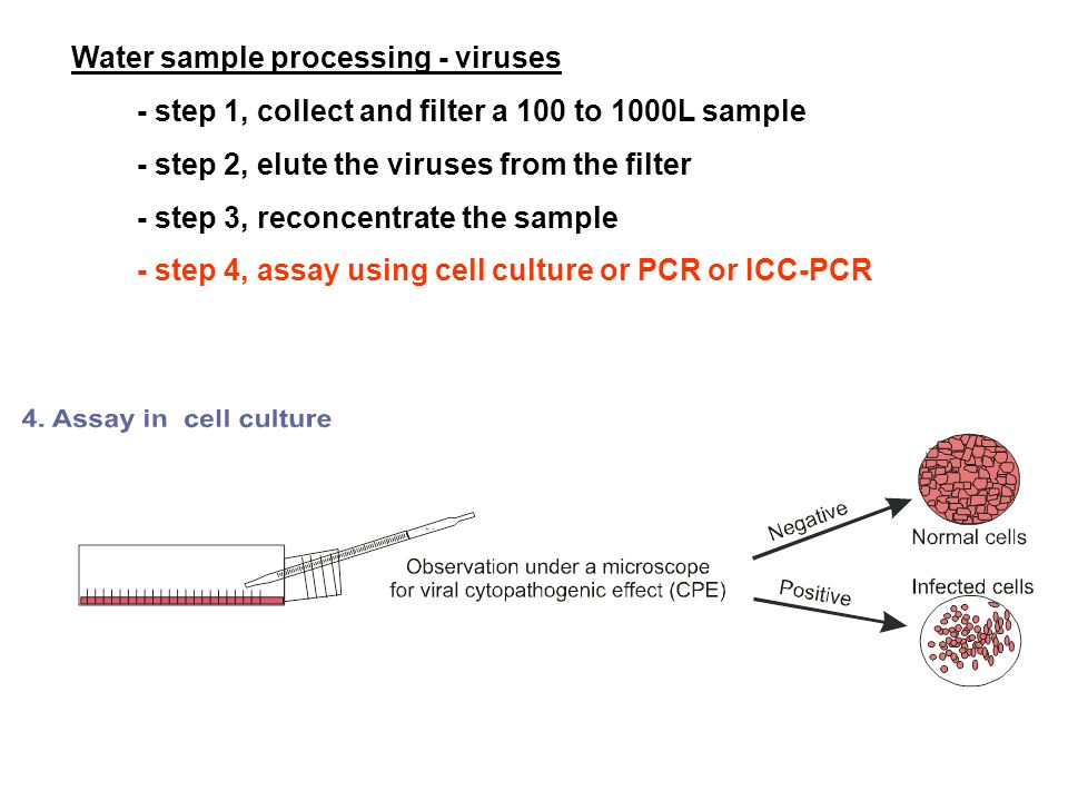 Water sample processing - viruses - step 1, collect and filter a 100 to 1000L sample - step 2, elute the viruses from the filter - step 3, reconcentra