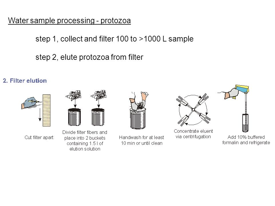 Water sample processing - protozoa step 1, collect and filter 100 to >1000 L sample step 2, elute protozoa from filter