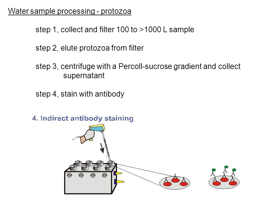 Water sample processing - protozoa step 1, collect and filter 100 to >1000 L sample step 2, elute protozoa from filter step 3, centrifuge with a Perco