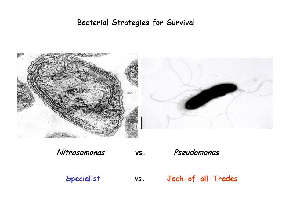 Bacterial Strategies for Survival Nitrosomonas vs. Pseudomonas Specialist vs. Jack-of-all-Trades