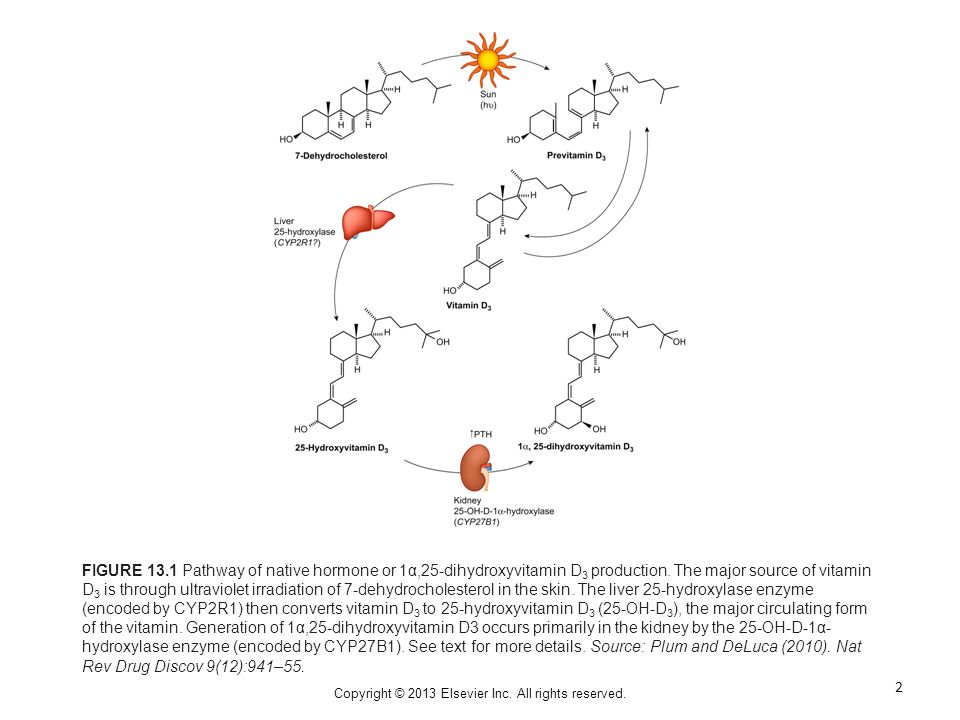 FIGURE 13.1 Pathway of native hormone or 1α,25-dihydroxyvitamin D 3 production.