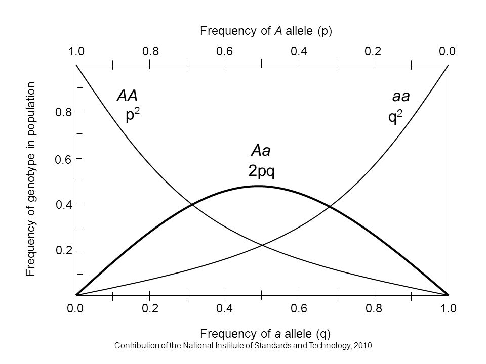 Contribution of the National Institute of Standards and Technology, 2010 AAaa Aa 1.0 Frequency of a allele (q) Frequency of A allele (p) 1.00.80.60.40