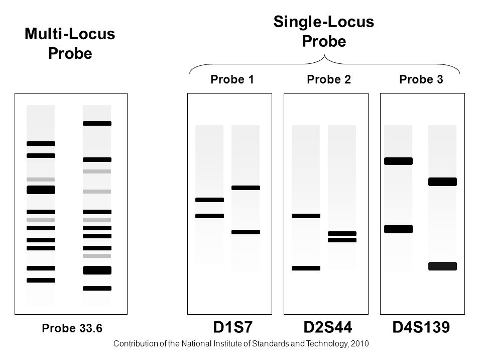 Contribution of the National Institute of Standards and Technology, 2010 Multi-Locus Probe Probe 1Probe 2Probe 3 D1S7D2S44D4S139 Single-Locus Probe Pr