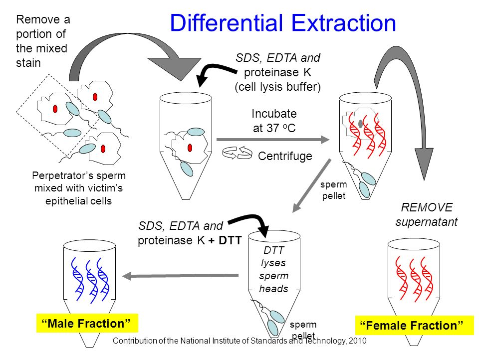 Contribution of the National Institute of Standards and Technology, 2010 Perpetrators sperm mixed with victims epithelial cells Centrifuge REMOVE supe