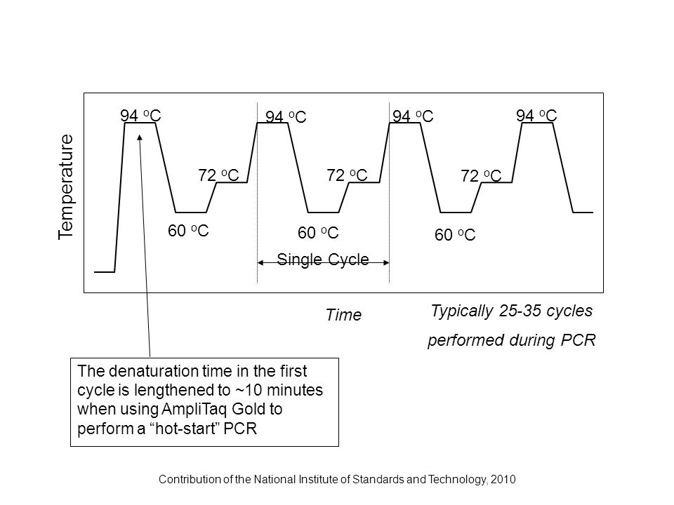 Contribution of the National Institute of Standards and Technology, 2010 94 o C 60 o C 72 o C Time Temperature Single Cycle Typically 25-35 cycles per